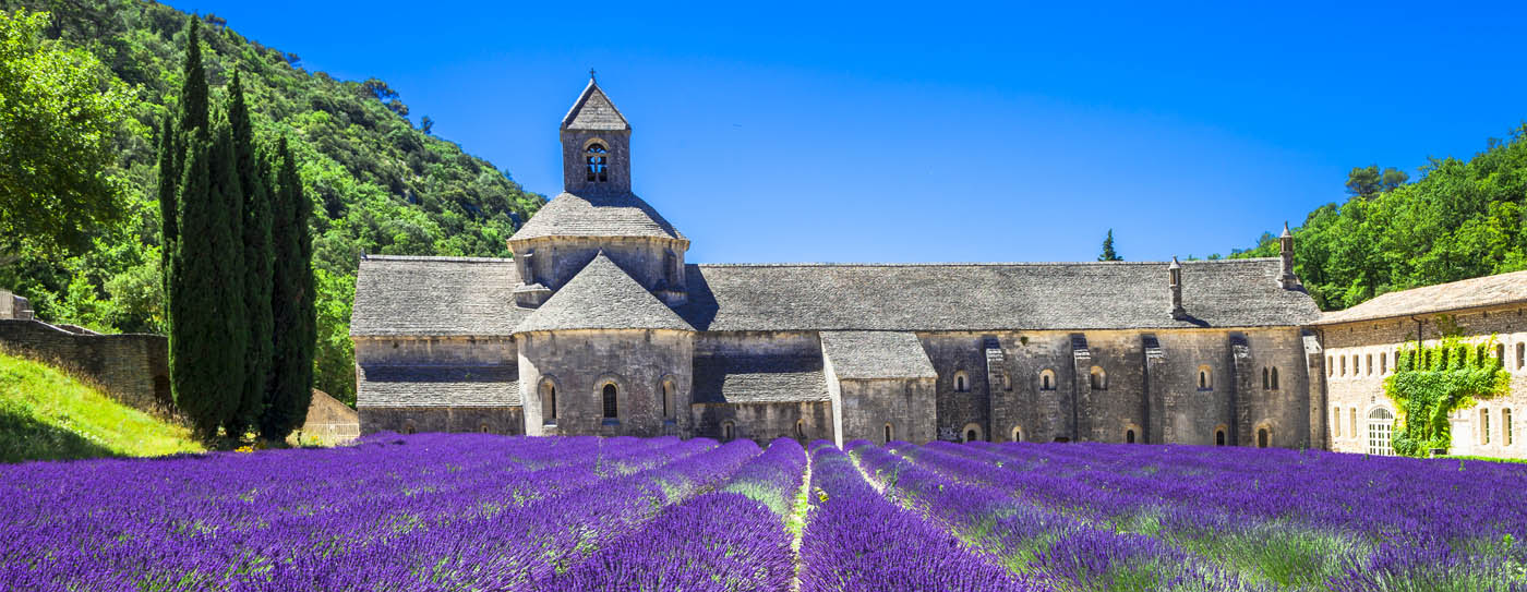 Provence Lavender field on Auswalk self-guided Provence walking tour