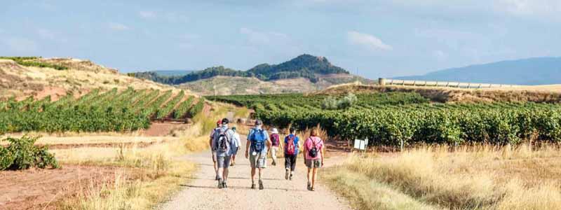 Walkers on the Camino de Santiago Pilgrimage